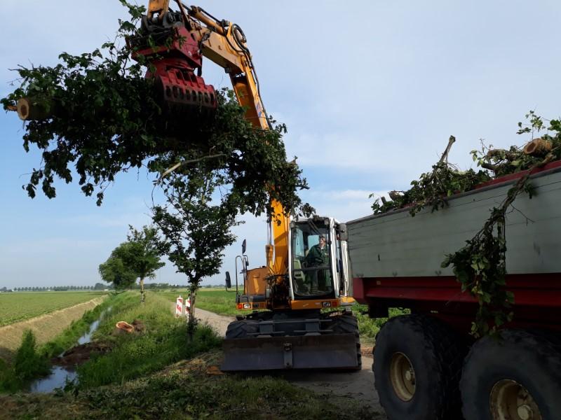 Bomen opruimen